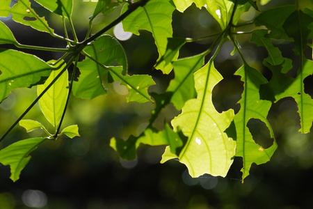The burned leaves
