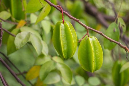 fruitschaal: Star fruit