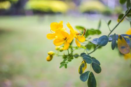 horizontal format horizontal: Flowers Stock Photo