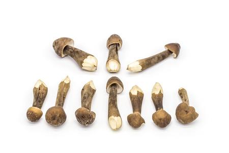 fullframes: Mushroom ingredients