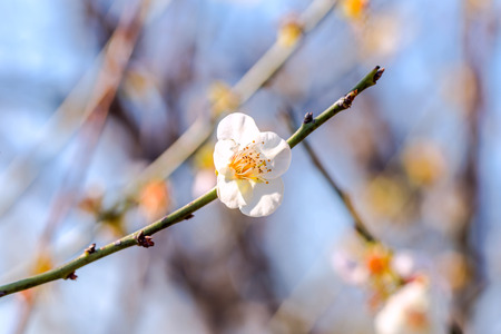 spring flower blooming Stock Photo