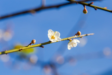 non: spring flower blooming Stock Photo