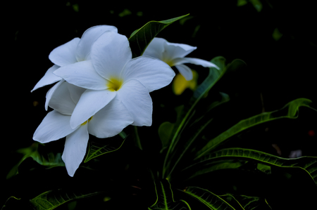 white flower in a rainy afternoon.