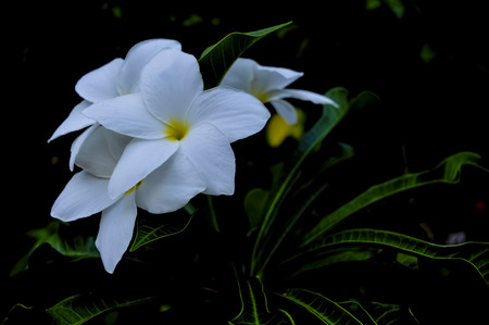 Beautiful white flower in a rainy afternoon. Stock Photo