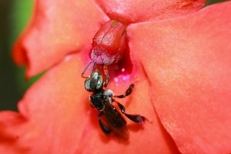 bee close up. Stock Photo