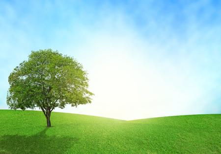 緑の草原、青い空と照明は、草でフレアします。