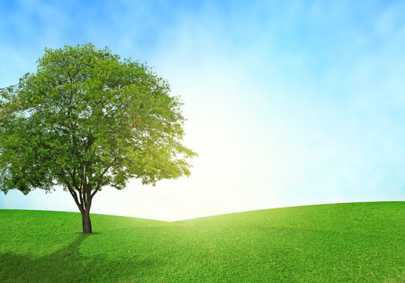 Campo verde, cielo azul y los brillos de iluminación del árbol en hierba.
