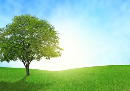 Campo verde, cielo blu e illuminazione dell'albero bagliore su erba.