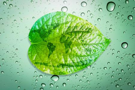 녹색 잎 환경 개념은 지구를 저장합니다. 스톡 콘텐츠 - 44074785