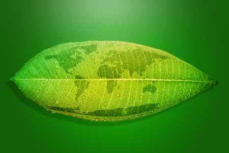 green environment: Green leaf environment concept save the earth.