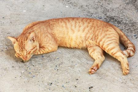 crouch: Cat sleeping crouch on the floor.