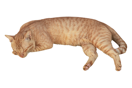 crouch: Cat sleeping crouch isolated white background. Stock Photo