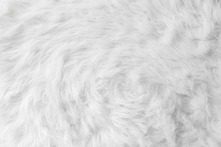 sheep wool: Sheep wool fur background texture wallpaper.
