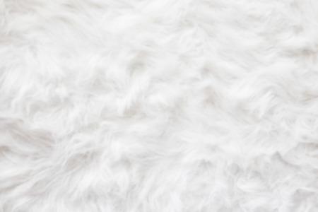 sheep wool: De-focused Sheep wool fur background texture wallpaper.