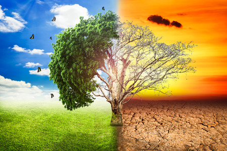 dry grass: Environmental concepts, Live and dead big tree. Stock Photo
