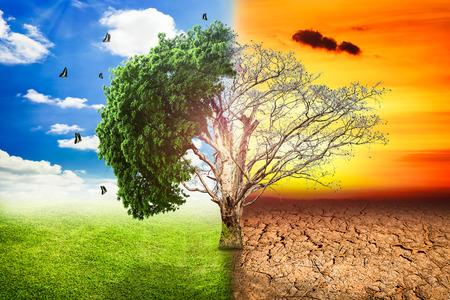 dode bladeren: Milieu-concepten, levende en dode grote boom. Stockfoto