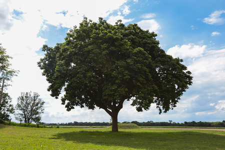 vacant land: Big tree and green environment on grassland. Stock Photo