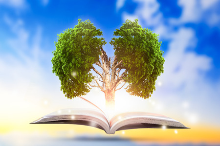 Conceptual with green tree of brain growing from book. Stock Photo