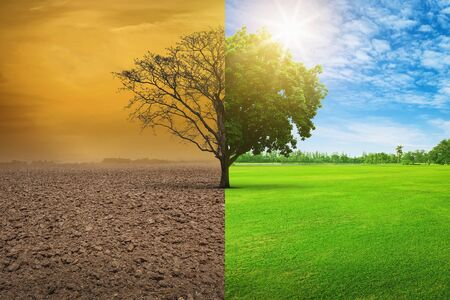 Global warming concept. A tree image showing of arid land changing environment.