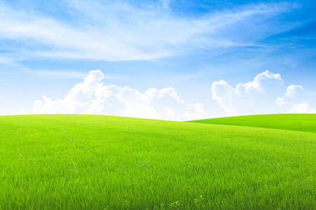 Field on green grass with blue sky on background. Stockfoto