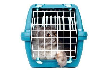 persona viajando: gato en jaula transportista Foto de archivo