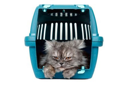 cat carrier: cat in cage carrier Stock Photo