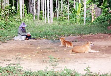 herdsman: Herdsman philanthropist