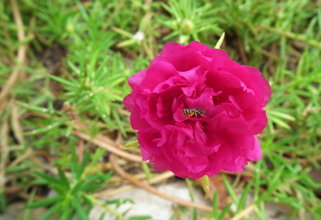 bee on flower: Bee on Flower in Thai forest.