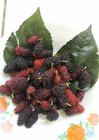 nutritional: Mul-berry : high nutritional value