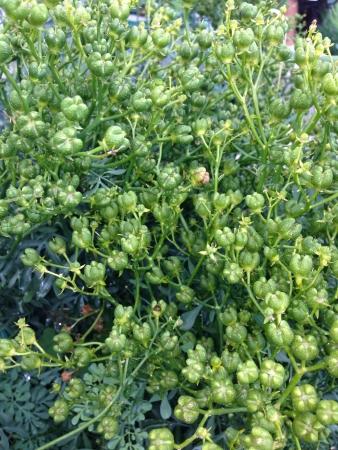 Green brush Stok Fotoğraf