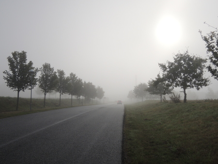 enclosing: Morning fog enclosing a road with trees. Could be used for illustrating a path into an unknown place.