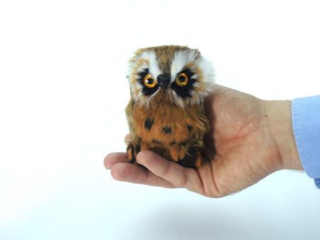symbolized: Knowledge transfer symbolized by handing over an owl - a symbol of knowledge and wisdom. Stock Photo