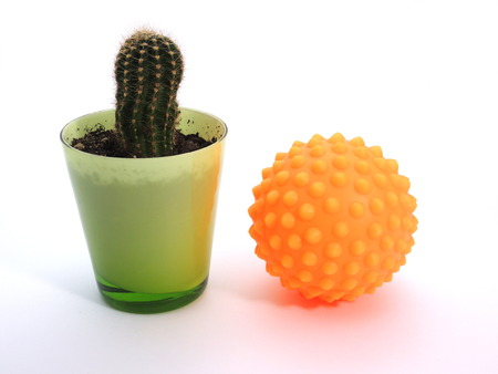 Cactus and massage ball symbolizing pain and relief