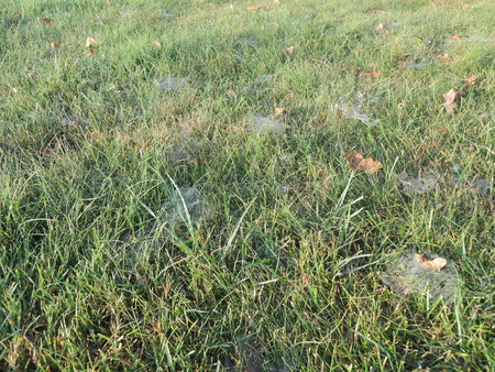 Spiderweb in grass on a fall day