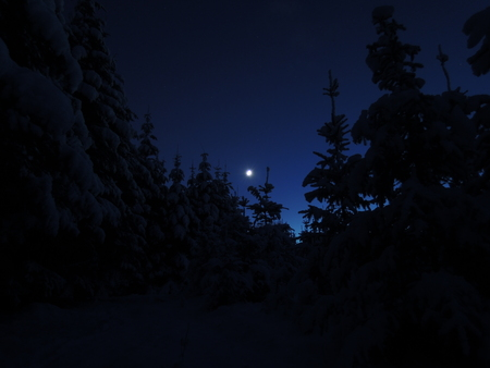 moonlit: Moonlit winter wonder land with newly fallen snow