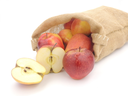 homegrown: A bag of home-grown ripe apples.