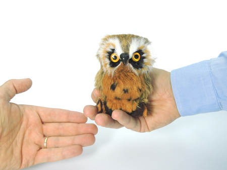 Knowledge transfer symbolized by handing over an owl - a symbol of knowledge and wisdom. Stock Photo