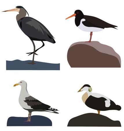 wader: Set of sea birds, isolated vector Illustration