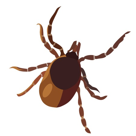 encephalitis: Insect tick, isolated Illustration