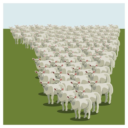 herd: Animal sheep herd queuing, keeping together Illustration