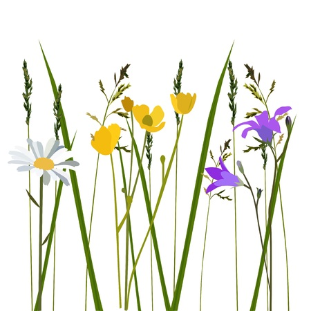 Flowers in meadow, isolated