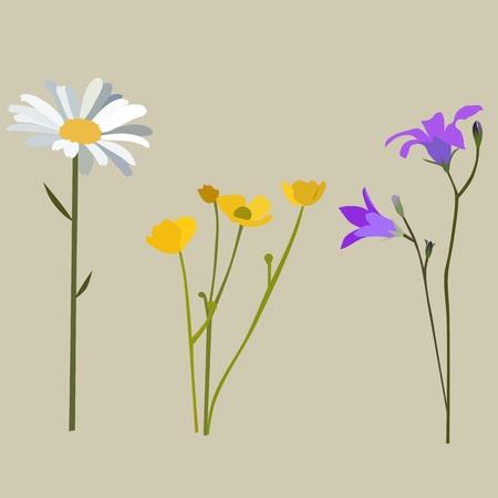 midsummer: Flowers in summer