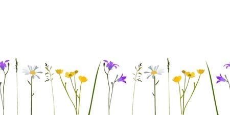 Seamless pattern wild flowers, isolated Illustration