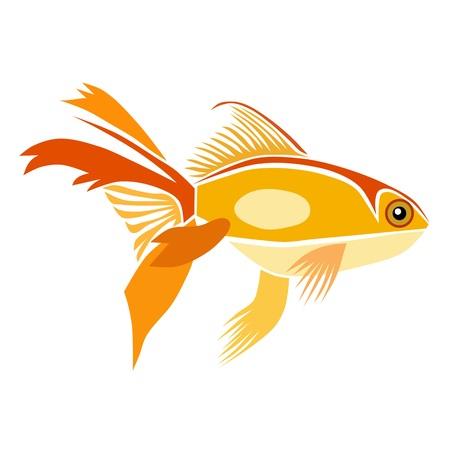 goldfish isolated: Goldfish isolated Illustration