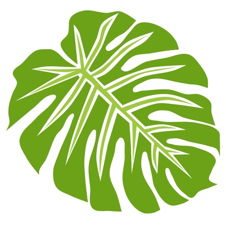 Tropical plant philodendron