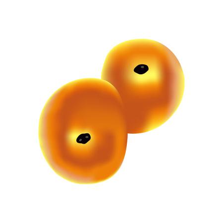 Traditional Swedish pastry saffron bun, vector Illustration