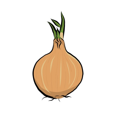 Hand drawn onion icon, Vector illustration.