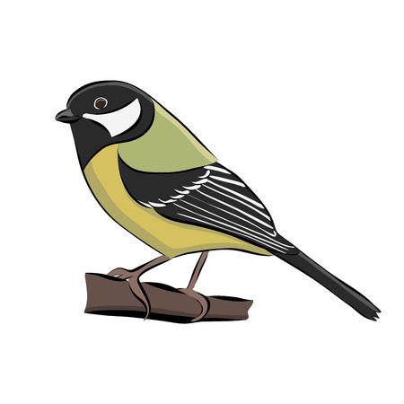 dibujado a mano pájaro grande tit ilustración .
