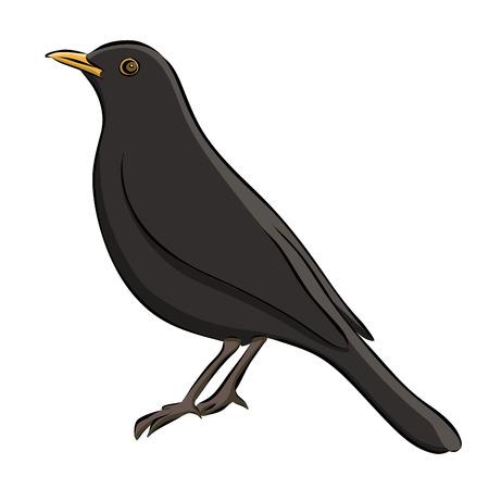 Hand drawn blackbird sketch illustration.