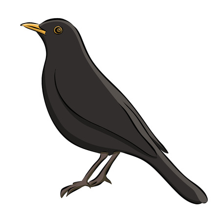 Hand drawn blackbird sketch illustration.